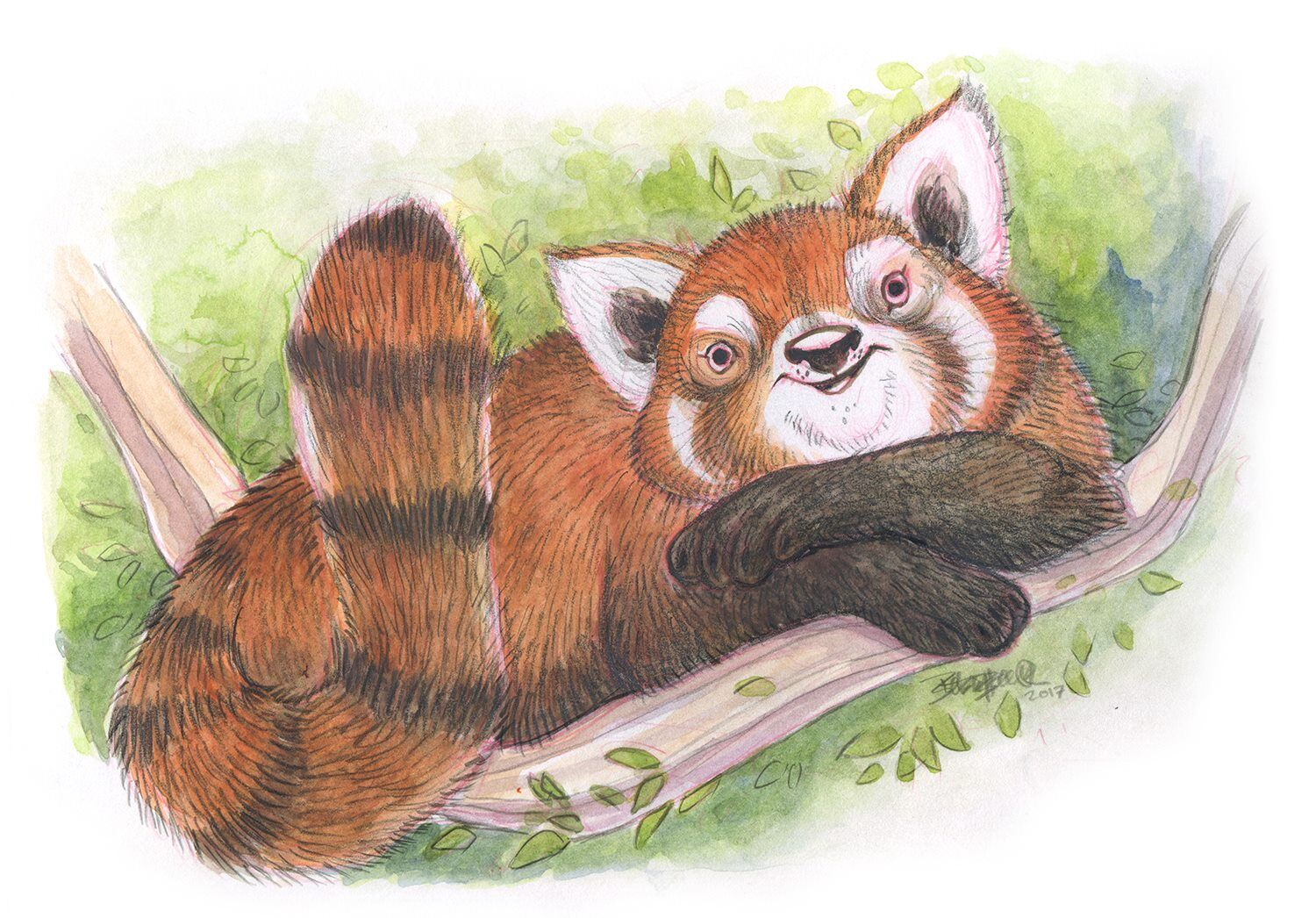 """Red Panda Buddy""By Betsy Bauer"